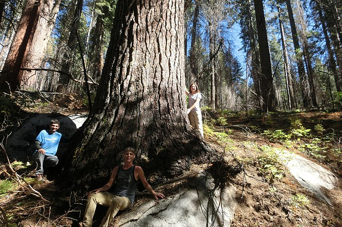 Tree hunters, from left, Ben Fetzer, Michael W. Taylor, Maria Mircheva pose with the second tallest sugar tree in Yosemite, Calif.