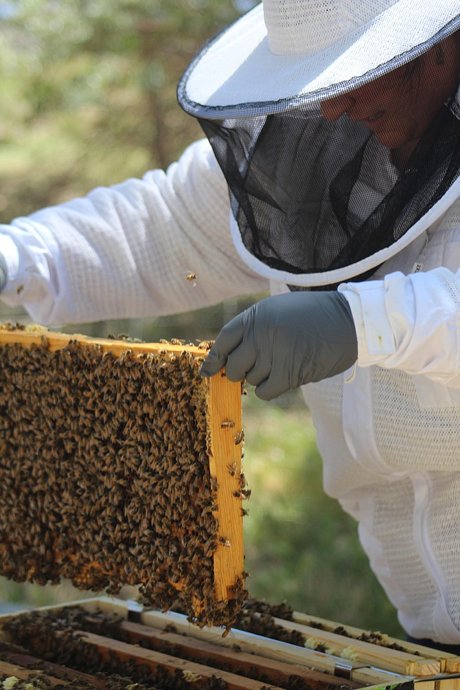 Lindsay Chichester, Douglas County Extension educator, started a beekeeping program in Gardnerville in 2020 and currently has four hives that she is overwintering.