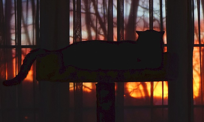 Little Max the cat awaits for sun up on Monday.