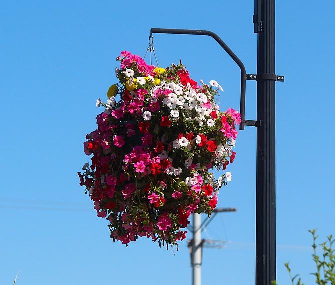 A hanging basket in Gardnerville last summer.