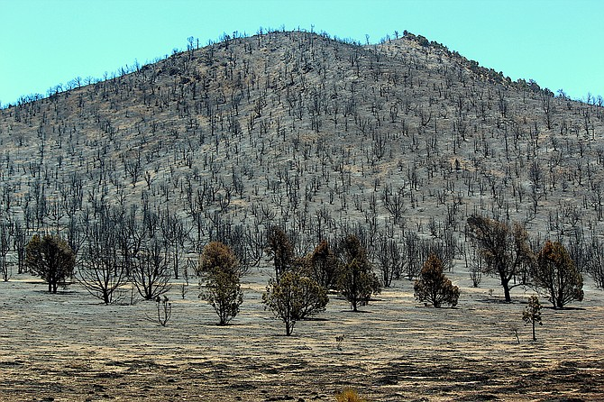 The piñon forest in Fish Springs was immolated in last year's Number's Fire.