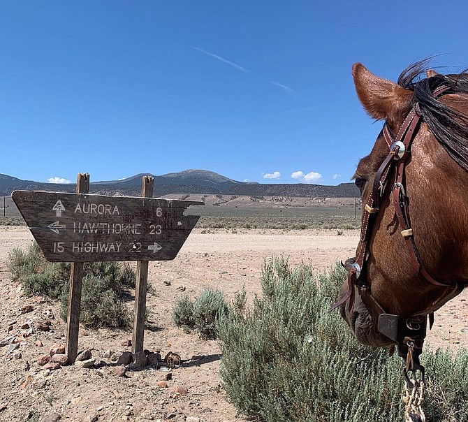 Juniper the adopted wild horse observes a sign showing it's a long way to anywhere out in the middle of Nevada in this photo taken by Samantha Szesciorka near the ghost town of Aurora.