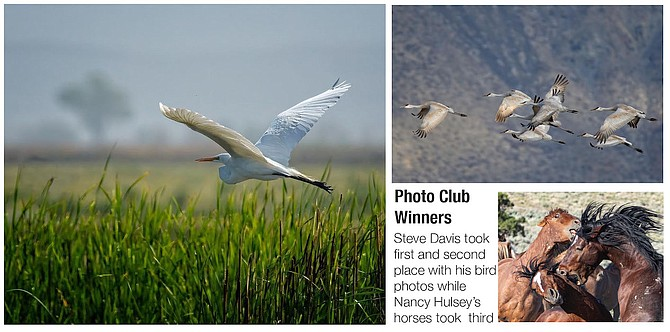 Winners of the July Photo Club contest were Steven Davis who took first and second place with his photos of birds and Nancy Hulsey who took third with her wild horse photo.