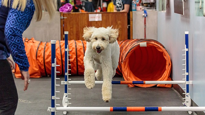 Zoom Room at the Summit Reno offers in-person agility training for pet owners to work through an obstacle course with their dogs.