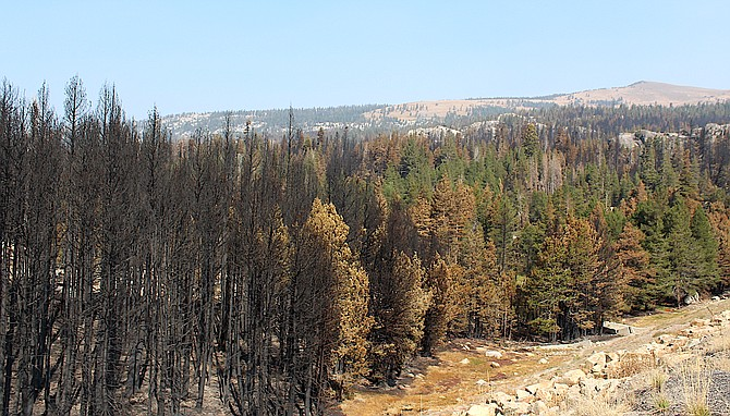 More than 17,000 hazard trees must be taken down before roads through the fire are safe to travel.