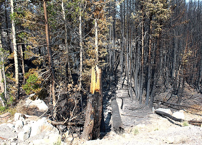 The Caldor Fire burned right up to Caples Lake dam along Highway 88.