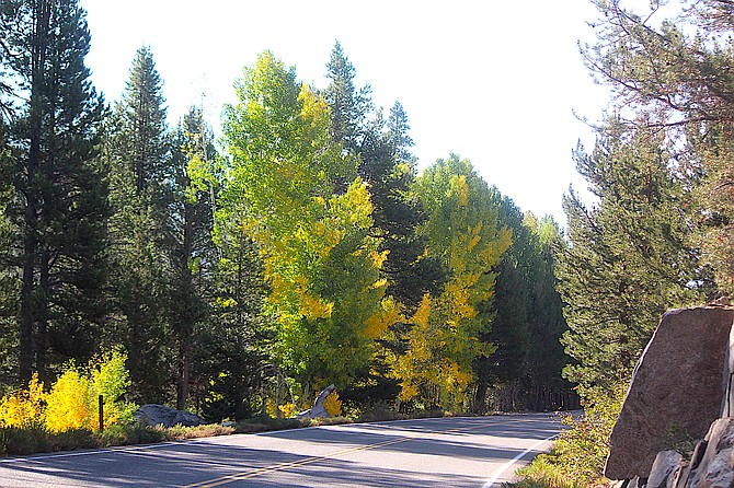 There's a little bit of color among the aspens along Blue Lakes Road as of Thursday. Friends of Hope Valley are hosting Aspen Day 2021 on Saturday.