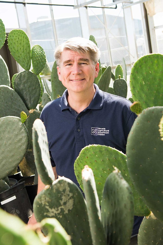 Professor John Cushman is researching ways to improve drought tolerance and water-use efficiency in crops by using traits from certain plants such as cactus.