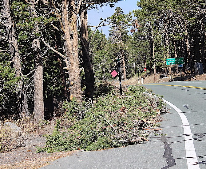 Green branches line Highway 88 near Caples Lake as fire crews clear brush and trees.
