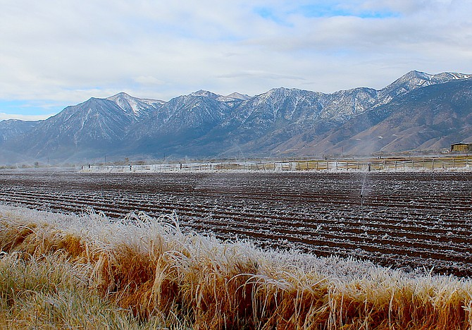 If anyone needed confirmation that the temperatures are dropping below freezing, here's a little homemade pogonip from Wednesday morning on a field along Highway 395 north of Minden.