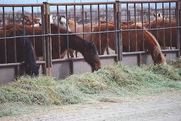 The Bureau of Land Management is conducting a tour on Saturday of wild-horse holding pens that are locatred northeast of Fallon.