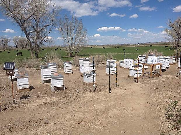 The Yerington apiary of Debbie Gilmore and Andy Joyner produces oney sold under the Hall's Honey label.