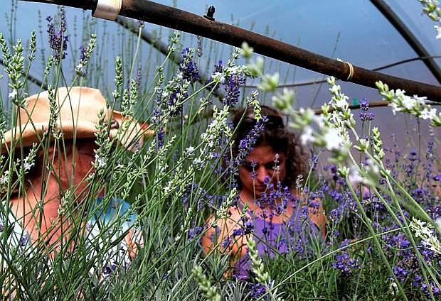 Attendees participate in a workshopat  Lavender Ridge Farm, Reno.