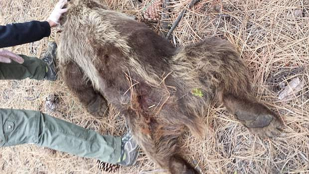 A man was identified as the person who shot and killed a bear in South Lake Tahoe.