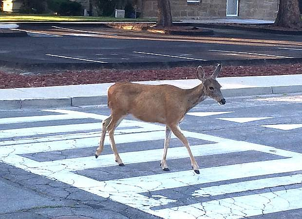 Greg Corbin took this photo early Thursday morning at the intersection of west Musser and north Phillips streets in Carson City.