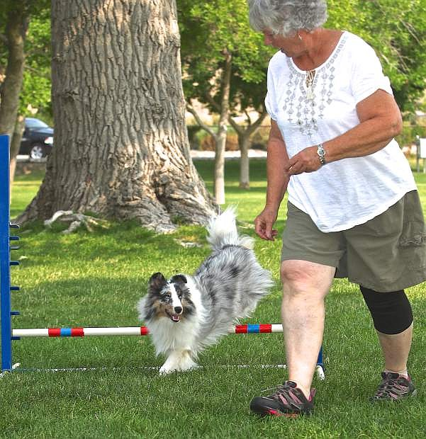 Gladys Pedigo of Placerville, Ca. practices with her 9-month-old Shetland Sheepdog 'Cal' Friday morning at Fuji Park. Quicksilver Agility Club, a Northern Nevada group that promotes the sport of dog agility with purebred or mixed breed dogs, is hosting a dog agility trial show Friday through Sunday at Fuji Park, located across from Costco in Carson City. Entries can be made from 8 to 8:30 a.m. Friday and from 7:30 to 8 a.m. Saturday and Sunday. For rules, forms and more information, go to www.quicksilveragility.org.