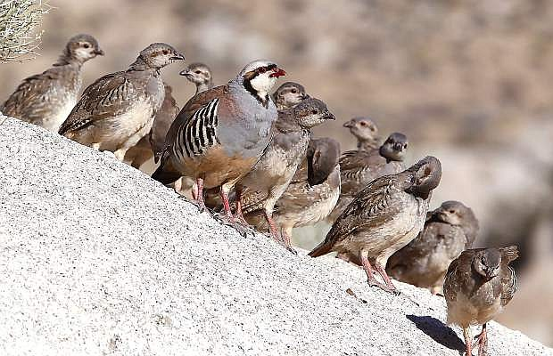 Bird hunting, specially chukar, is expected to have an increased population.