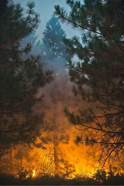 Fire burns through tall trees near Uncle Tom's Cabin in El Dorado County on Thursday, Sept. 18, 2014. The King fire has burned over 70,000 acres. The wind-whipped fire burned through 114 square miles and was 10 percent contained, according to California Department of Forestry and Fire Protection. (AP Photo/The Sacramento Bee, Randall Benton)