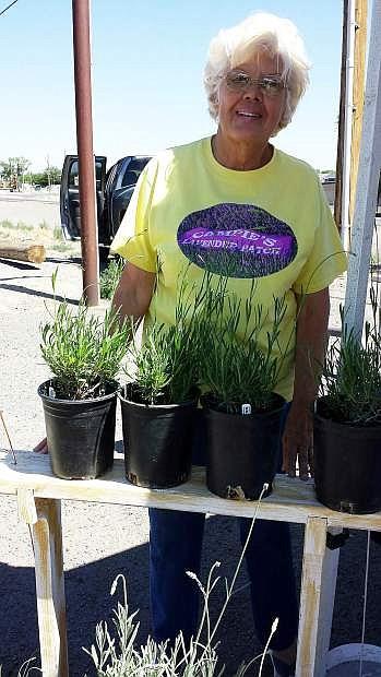 Diane Van Camp sells homegrown lavender plants at Fernley Farmers Market on Thursdays.