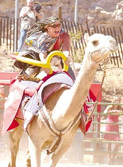 Donna Aartz rides a Camel during the Virginia City Camel Races. Photo by Brian Corley