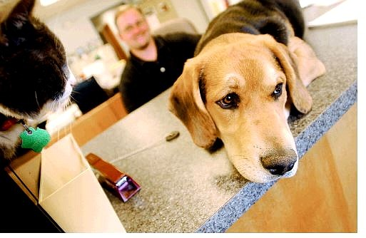 Rick Gunn/Nevada Appeal Blue, a 20-week-old basset hound mix, hangs out at Carson City Animal Shelter with Smokey the cat and shelter Supervisor Pat Wiggins on Thursday. The pup was thrown over the fence at the facility and received three broken bones in his foot. The pooch now has a permanent home with the Wiggins family.