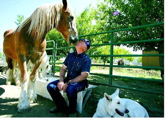 Dan the draft horse leans into Willis Lamm's face while Teego the quarter horse finds something to eat and Ace, right, the white German shepherd, relaxes at Lamm's Stagecoach ranch on Thursday morning.    BRAD HORN/Nevada Appeal