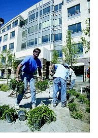Cathleen Allison/Nevada Appeal Jason Hyatt of Peri Landscape Construction and Materials works on the landscaping in front of the state's new Department of Conservation and Natural Resources building at Stewart and Little streets Tuesday afternoon.
