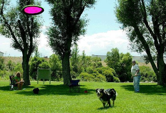 Kevin Clifford/Nevada Appeal Dave Forbes of Carson City plays frisbee with his Australian shepherd Destiny on Friday at Fuji Park. Lorrie Sears and dog Roo, also of Carson City, watch from the cool shade.
