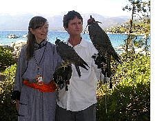 Filmmakers Joseph Spaid and sound designer Anna Halldorsdotti pause with hawks since no eagles were available at the press conference for the Reno/Tahoe International Film Festival. Nevada Appeal