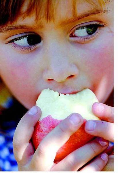 Brian Sokol/Nevada Appeal Bella Kordonowy, 4, takes a bite of an organic Gala apple, at Agape Organics, her grandparents' orchard in Washoe Valley, on Wednesday. Agape Organics is the only functioning apple orchard in Northern Nevada.