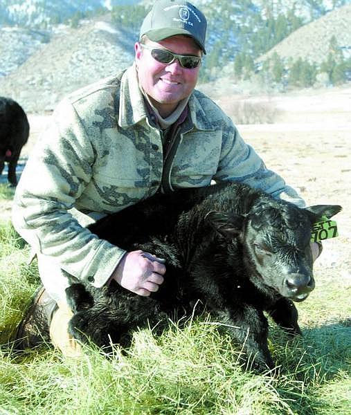 Shannon Litz/Appeal News Service CarsonValley rancher Nick Uhart is shown with a day-old calf in the Carson Valley on Thursday.