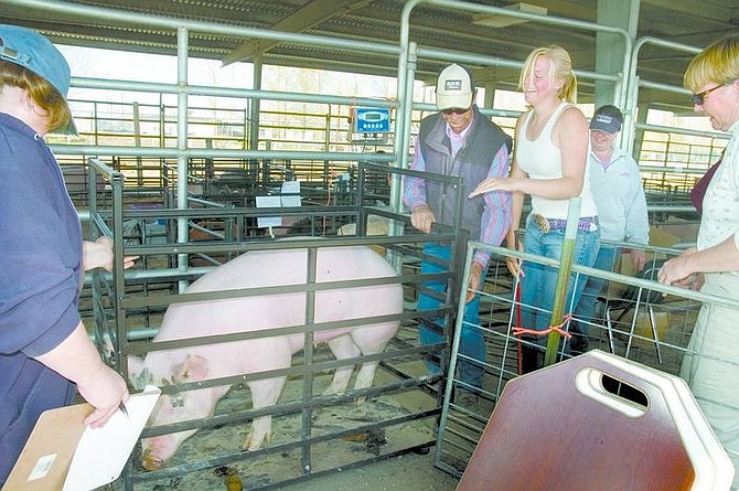 Katherine Withers, in the white tank top, smiles after successfully getting her pig on the scales at Thursday's official weigh-in for the Churchill County Junior Livestock Show and Sale.       Christy Lattin/NEVADA Appeal  News Service