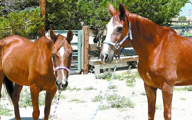 Submitted photoHope and Courage, two starved horses found abandoned in Fish Springs, will be adopted by a couple soon moving to Stagecoach.