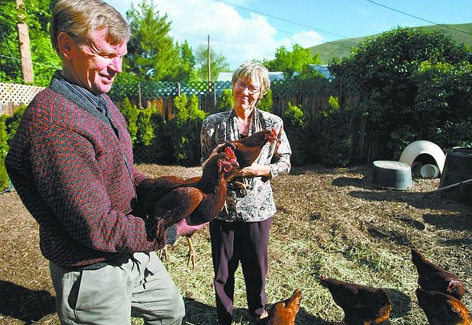 Cathleen Allison/Nevada Appeal Pete Hansell and his wife Barbara Howe talk Tuesday afternoon about the seven Rhode Island red hens they have at their West Carson City home. Hansell, who is running for mayor, wants to fight the ordinance restricting chickens in residential neighborhoods.