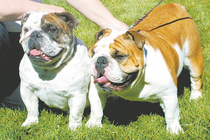 Sandi Hoover/Nevada Appeal Linda Kilgore of Klamath Falls, Ore., shows off her two bulldogs, 2-year-old Patch, left, and 3-year-old Button.