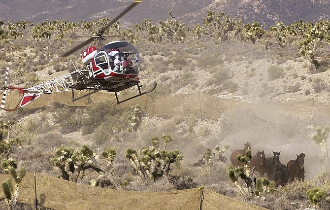 FILE - In this June 28, 2002, file photo, a helicopter used by the Bureau of Land Management rounds up wild horses near Cold Creek, Nev. The government said Thursday it will scale back costly roundups of wild horses that some critics contend are inhumane.  (AP Photo/Joe Cavaretta, File)