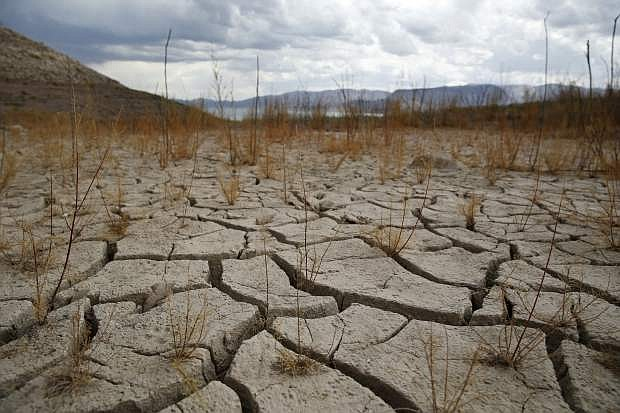 FILE - In this May 18, 2015, file photo, plants grow out of dry cracked ground that was once underwater near Boulder Beach in the Lake Mead National Recreation Area near Boulder City, Nev. A panel gauging the effect of drought in Nevada is due to hear from farmers, tribes, environmentalists, water officials and others at a state Department of Agriculture hearing in Sparks. State Climatologist Doug Boyle is also expected to update current conditions during the Nevada Drought Forum on Wednesday, Aug. 19, 2015. (AP Photo/John Locher, File)