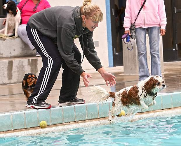 Laura Redmon prompts her Cavalier King Charles Spaniel Biscuit into the pool on Saturday at the CASI Pooch Plunge.