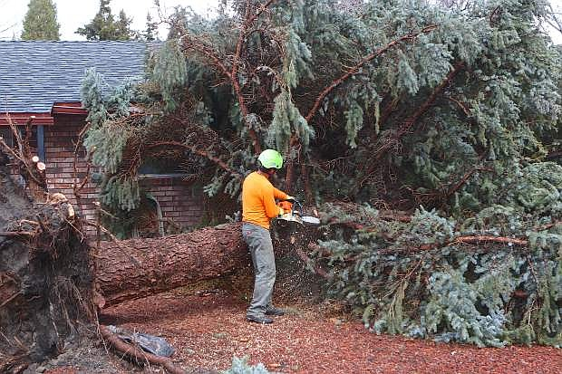 Robert Lopez of Stay Green Tree Service starts to dismantle a 60-plus foot Colorado Spruce tree that blew over into Eleanor Foster's front yard on Calaveras Drive during a windstorm around 1:30 pm Friday. Luckily the tree threaded itself right in between her house and her neighbor's and nobody was injured. With a brief break in the weather and wind Saturday, another system will make its way into Carson City bringing colder temperatures and the possibility of heavy snow in the capital city this afternoon and evening, according to the National Weather Service. A Winter Weather Advisory has been issued for Carson City, Reno, Carson Valley, Dayton and Virginia City areas, as well as the Lake Tahoe Basin where up to a foot of snow is possible.