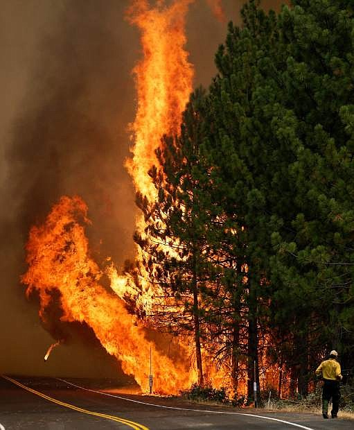 The Rim Fire burns along Highway 120 near Yosemite National Park, Calif., on Sunday, Aug. 25, 2013. With winds gusting and flames jumping from treetop to treetop, hundreds of firefighters have been deployed to protect communities in the path of the Rim Fire raging north of Yosemite National Park. (AP Photo/Jae C. Hong)