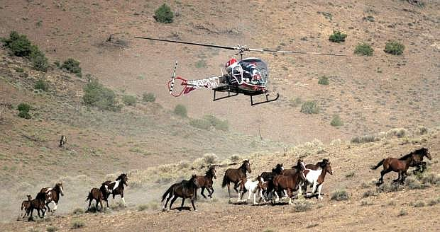 FILE -  In this Aug. 13, 2002 file photo, a Nevada Department of Agriculture helicopter is used to round up wild horses on the Virginia Range east of Reno, Nev.  The state of Nevada has signed a cooperative agreement with wild horse protection advocates allowing the longtime critics of mustang roundups to have the first shot at purchasing state-captured animals that otherwise might end up at the slaughterhouse.  (AP Photo/Reno Gazette-Journal, Liz Margerum, File)