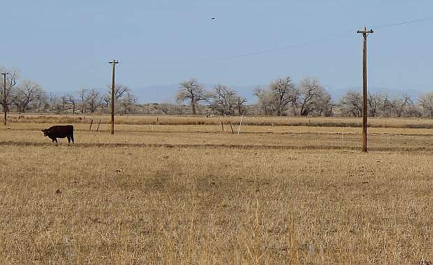 The drought is here to stay this year as water sources have become scarce.
