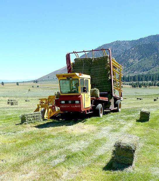 A harrowbed picks up three-string bales on John Ascuaga's Ranch in July 2013.