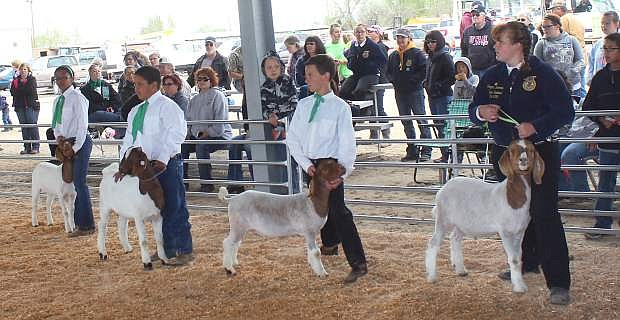 Churchill County 4-H and FFA students displayed their livestock and poultry during April's annual Junior Livestock Show.