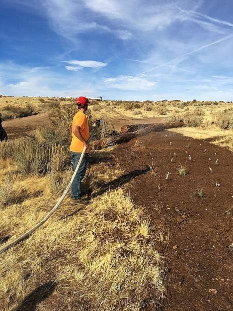 Jake Kordonowy watering plantings.