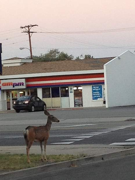 A deer is seen across from AM/PM at 1017 N. Carson St.