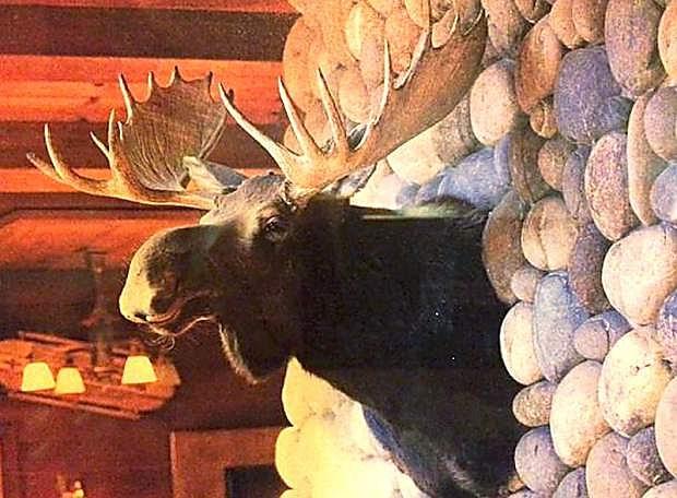 This stuffed moose head was stolen from Sunnyside Resort on Jan. 22.