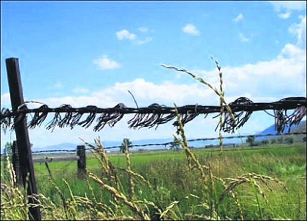 Comstock barbed wire can be seen in Carson Valley and other areas in Northern Nevada.