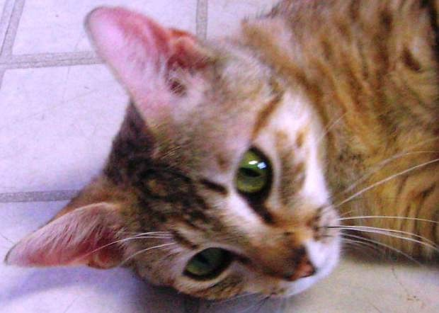 Rita, a five-year-old gray-brown tabby and her daughter are in search of a home.