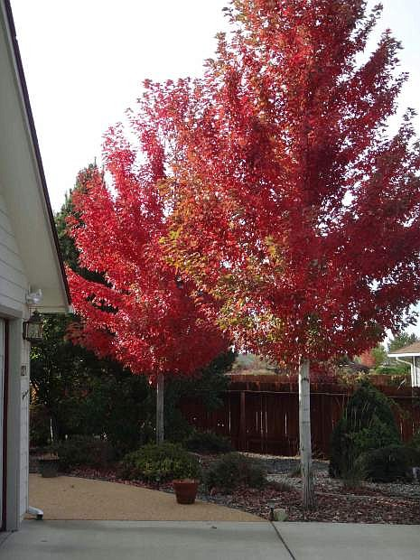 University of Nevada Cooperative Extension offers two free presentations on how to renovate home landscapes to make them more livable and resource efficient.